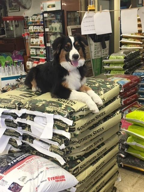 Benny, The Wonder Dog