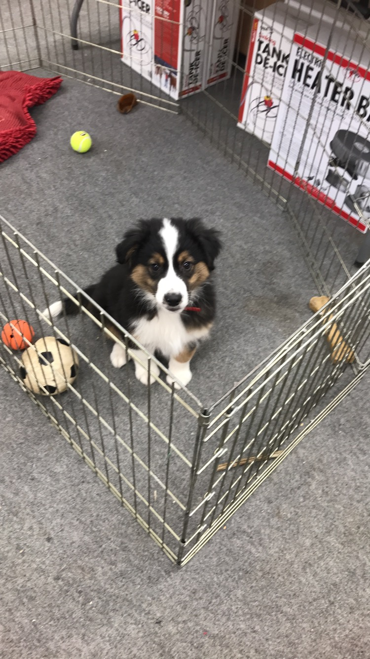 Benny, Store Mascot (as a puppy)