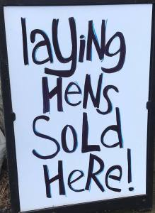 laying hens sold here sign