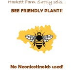 bee friendly plants