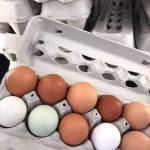 Farm Fresh Eggs from OUR OWN chickens.